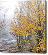 Fall Color And Fog Canvas Print