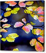 Fall Color Change Canvas Print
