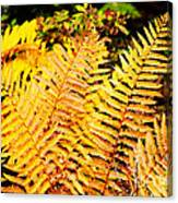 Fall Color Cinnamon Fern Canvas Print