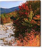 Fall Color In The White Mountains Canvas Print