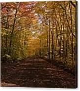 Fall Color Road Canvas Print