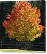 Fall Colored Tree Canvas Print