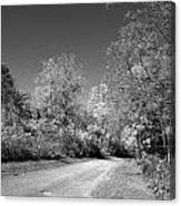 Fall Colors In Black And White Canvas Print