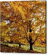 Fall Colours In Eastern Townships Canvas Print