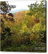 Fall Delight 7 Canvas Print