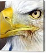 Fall Eagle 3 Canvas Print
