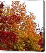 Fall Filled Sky Canvas Print
