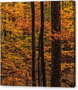 Fall Forest Canvas Print
