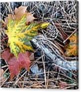 Fall Forest Floor Canvas Print