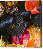 Fall Fungi Canvas Print