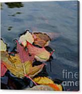 Fall Gathering Canvas Print