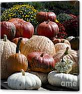 Fall Harvest Colorful Gourds 7965 Canvas Print