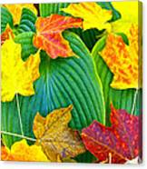 Fall Hosta Canvas Print