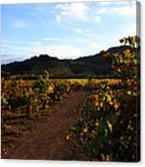 Fall In A Sonoma Vineyard Canvas Print
