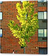 Fall In Rochester Canvas Print