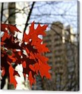 Fall In The City 2 Canvas Print