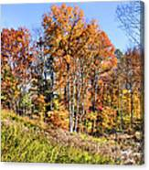 Fall In The Foothills Canvas Print