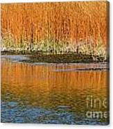 Fall In Yellowstone National Park Canvas Print