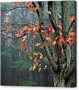 Fall In Your Face Canvas Print