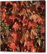 Fall Ivy On An Old Wall Canvas Print
