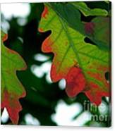 Fall L Eaves Canvas Print