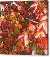 Fall Leaves - Digital Art Canvas Print