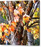 Fall Leaves 2 Canvas Print
