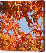 Fall Leaves Art Prints Autumn Red Orange Leaves Blue Sky Canvas Print