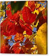 Fall Leaves Flp Canvas Print