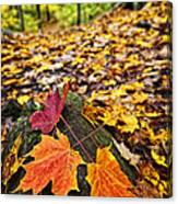 Fall Leaves In Forest Canvas Print