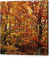 Fall Leaves On Trees Canvas Print