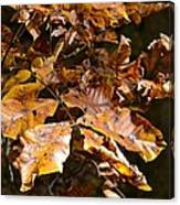 Fall Leaves Part Five Canvas Print