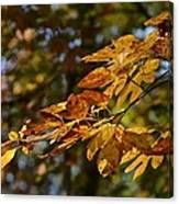 Fall Leaves Part One Canvas Print