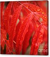 Fall Leaves Red 3 Canvas Print