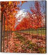 Fall Line Up Canvas Print