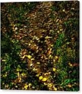 Fall Lined Trail Canvas Print