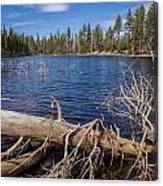 Fall Logs On Reflection Lake Canvas Print