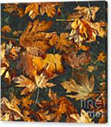 Fall Maple Leaves On Water Canvas Print