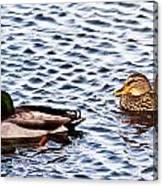 Fall Millards Swiming Canvas Print