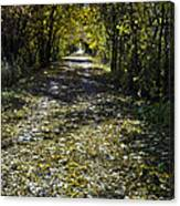 Fall On Macomb Orchard Trail Canvas Print