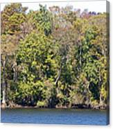 Fall On The Suwannee River Canvas Print