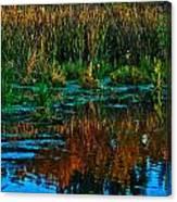 Fall Reflection Canvas Print