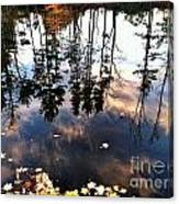 Fall Reflection Of Pines Canvas Print