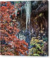 Fall Scene At Lost Maples Canvas Print