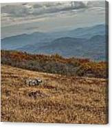 Fall Scene On Whitetop Mountain Va Canvas Print