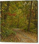 Fall Trail Scene 22 Canvas Print