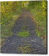 Fall Trail Scene 30  Canvas Print