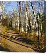 Fall Trail Scene 35 B Canvas Print