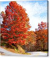 Fall Tree By The Road Canvas Print