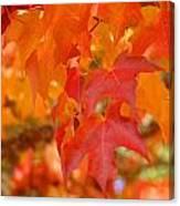 Fall Tree Leaves Art Prints Orange Red Autumn Canvas Print